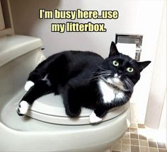 Funny animal pictures of the day animal humor кошки, животны Funny Animal Memes, Cute Funny Animals, Funny Cute, Funny Memes, Hilarious, Animal Humor, Super Funny, Crazy Cat Lady, Crazy Cats