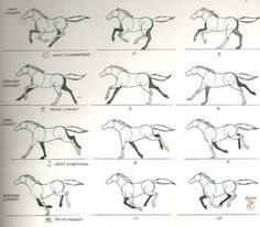 Horse Gallop Ref.