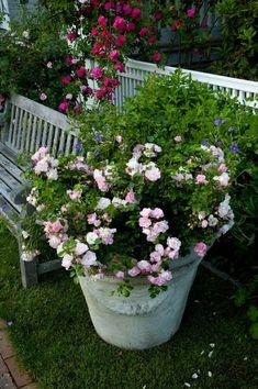 Planter Rosier, Comment Planter, May Flowers, Urban Farming, April Showers, Plantation, Garden Inspiration, Planters, Herbs