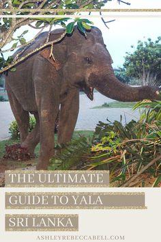 Yala Sri Lanka: The Ultimate Travel Guide - Ashley Rebecca Sri Lanka Itinerary, Block Area, Wild Elephant, Domestic Flights, Ultimate Travel, Bird Species, Young Boys, Travel Couple, Asia Travel
