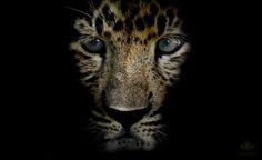 """curitas: """" Baby-Leopard (by sabineroediger) """""""