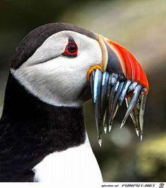 -Datei 'Fabelhafte Tieraufnahmen!.' von Petzi. Eine von 875 Dateien in der Kategorie 'Tiere' auf FUNPOT. Kommentar: Fabelhafte Tieraufnahmen!
