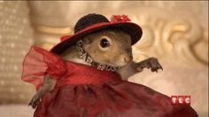 Tonight everybody...don't forget! TLC Channel My Crazy Obsession: My Amazing Squirrel  10 PM EST Wednesday April 17