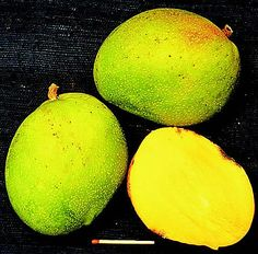 Chino. Mid-season cultivar of no commercial significance. However, trees produce abundant fruits of good quality. Multiplication by seed is possible. The medium-sized fruit has a greenish-orange colour often combined with a light red flush. The average fruit weight is 386 g The yellow flesh is firm, spicy and juicy with only a moderate amount of fibre. Small to medium tree. Production (January/February) is heavy and regular, but the cultivar is highly susceptible to anthracnose