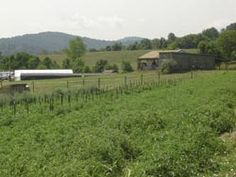 Waterpenny Farm: Healthy, sustainably grown vegetables