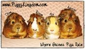 DO NOT KEEP GUINEA PIGS AND RABBITS TOGETHER Click HERE to find out why RSPCA GUIDELINES Companionship - to be with other guinea pigs. The widespread practice of keeping guinea pigs and rabbits...
