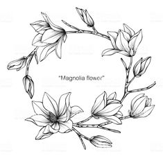 Magnolia flower drawing illustration. Black and white with line art on white backgrounds. - Royalty-free Magnolia stock vector Flower Drawing Tutorials, Flower Line Drawings, Drawing Flowers, Flower Drawing Images, Painting Flowers, Art Flowers, Colorful Flowers, Paper Flowers, Wild Flowers