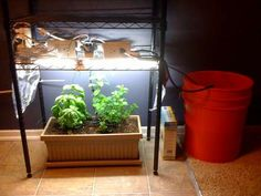 Garduino.  Arduino boards running a home garden.  Controls lights and water, while monitoring conditions.