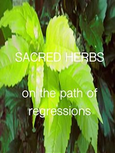 Sacred Herbs Amazon Instant Video ~ Graciano Alexis Blanco, https://www.amazon.com/dp/B01EVW358Q/ref=cm_sw_r_pi_dp_--MDxbWYSCB2T