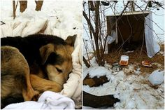 Amazing Woman Spends 2 Freezing Nights in NYC Park to Save a Senior Feral Dog Homeless Dogs, Homeless People, Helping The Homeless, Miracle Stories, Animal Rescue Stories, Wild Dogs, Love Home, Stray Dog, Dog Friends