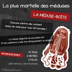 Sa brûlure est comparable à...http://lesleconsdechoses.com/animaux/la-meduse-la-plus-mortelle/  #meduse #venin #mortel