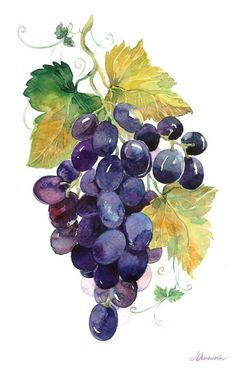 Set of 2 watercolor grapes. Watercolors can be used for postcards, various invitations... You can print on heavy paper, placed in a frame and decorate the interior of your home. All files have a resolution of 300 pixels per inch and the size of 37 to 57 cm. Set of other