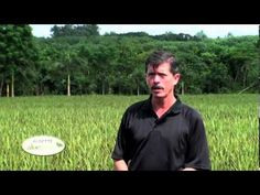 Where does our Aloe come from? Santiago takes us on a tour through the island of Hainan, where we harvest our Aloeganic aloe vera. Aloe Vera, Health Benefits, Falling In Love, Harvest, Skincare, Healing, Canada, Ship, Cosmetics