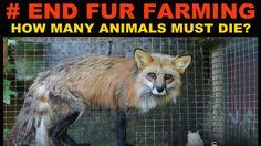 Petizione · Jeff Leal: Ban Fur Farming in Ontario, Canada · Change.org