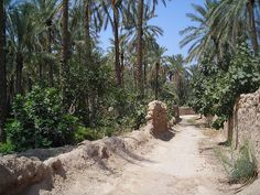 Tolga , Biskra , Algerie by verdoura, via Flickr