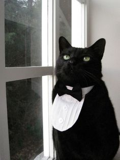 Oh my dear. $18 #etsy #cat #collar #clothes #tuxedo #white #black #cute
