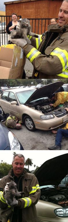 Pasadena firefighters rescue kitten trapped in car engine | Shared by LION