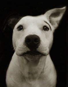 Portraits of dogs living in American shelters from Traer Scott. A-DOR-A-BLE.