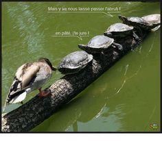 Cartes postales animalières.
