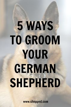 Wicked Training Your German Shepherd Dog Ideas. Mind Blowing Training Your German Shepherd Dog Ideas. German Shepard Training, German Shepherd Puppies, German Shepherds, German Shepherd Names, Yorkshire Terrier Puppies, Dog Activities, Training Your Dog, Training Tips, Animals