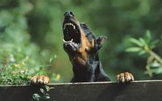 And stay OUT...doberman