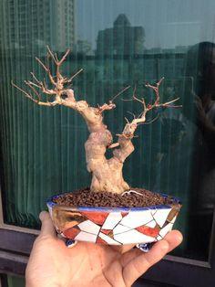 Love this pot! Photo by 快悦齋 - 盆栽鉢. #bonsai #pot #bonsaipot #inspiration #japan