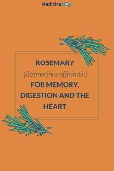 Rosemary (Rosmarinus officinalis) for Memory, Digestion and the Heart