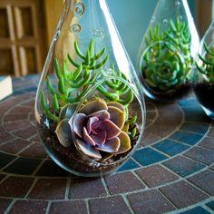 Teardrop Succulent Terrarium Trio Kit Perle von by ShopSucculents