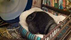 Sparkles sleeping in her new sofa.