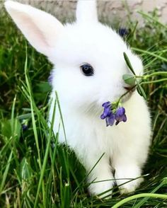 This bunny is so white. Can someone tell me is the flower lavender Cute Baby Bunnies, Baby Animals Super Cute, Cute Little Animals, Cute Funny Animals, Cutest Bunnies, White Bunnies, White Rabbits, Cute Bunny Pictures, Baby Animals Pictures