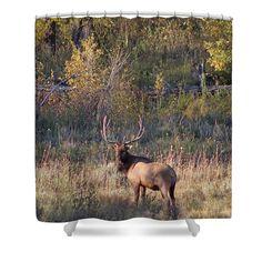 Fall Sunset Satellite Bull Elk II  Photography/Digital Art