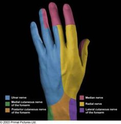 1000+ images about Elbow on Pinterest | Ulnar Nerve, Ulnar ...