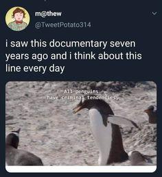 New Memes, Dankest Memes, Jokes, True Memes, Top 20 Funniest, Should Have Known Better, Funny New, Funny Relatable Memes, Hilarious Memes