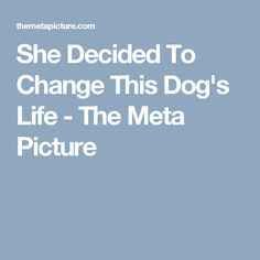 She Decided To Change This Dog's Life - The Meta Picture