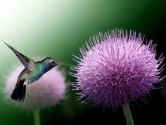 Outdoor Classroom: Hummingbird Feeder