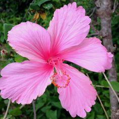 Flower in Hawaii. My favorite
