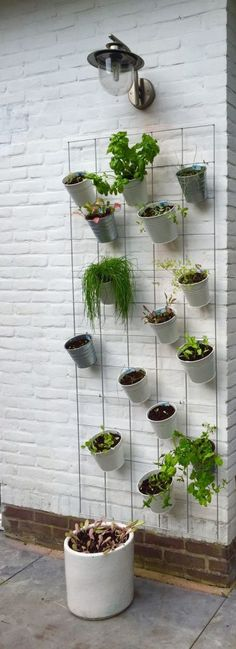 Five Ideas For Your Vertical Herb Garden – Handy Garden Wizard Diy Garden, Herb Garden, Vegetable Garden, Home And Garden, Sugar Baby Watermelon, Types Of Herbs, The Bad Seed, Potting Soil, Growing Herbs