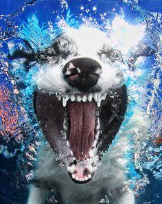 Seth Casteel - Under water dogs