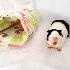 New to CreatedbyLauraB on Etsy: Cozy tunnel for small animals guinea pigrabbit ferret pet hideout pigaloo pet sleeping bag. cage accessories small animal toy hideout (15.00 USD)