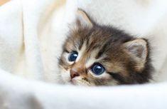 Getigerte katze baby decke