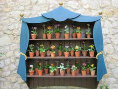 MAKE AN AURICULA (PRIMULA) GARDEN THEATER   auricula theater primula garden wall garden 1700 design