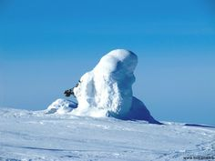 Snow covered tree on top of Luosto fjell in Finnish Lapland.