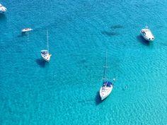 Moth, Insects, Animals, Caribbean, Website, Croatia, Greece, Majorca, Search