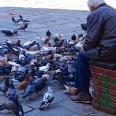 Loneliness and hunger with a warm heart. Elderly Man, Urban City, Pinterest Photos, Loneliness, Lonely, Birds, Warm, Nature, Photography