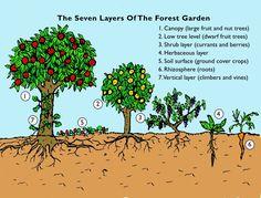 Resultado de imagen para forest gardens
