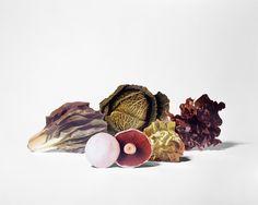 Il design del cavolo, del radicchio e del fungo. Design cabbage, lattuce and mushrooms. Fotografia e styling / Photography and styling: Scheltens + Abbenes—2nd best set designer 2015 by @trendland #vemverde