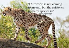OUTRAGEOUS!!!!! HELP STOP THIS HORRIFYING DESTRUCTION OF OUR WORLD'S REMAINING WILDLIFE ON A DAMN NATURE RESERVE!!!!!  TELL South Africa: President Jacob Zuma; Minister Edna Molewa: STOP all HUNTING of Kruger National Park's BIG GAME!  SHOOT PHOTOS - NOT WILDLIFE!!!!!      PLEASE SIGN AND SHARE WIDELY!!!!!