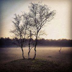 Drouwenerzand - Hondsrug, Drenthe, The Netherlands, Instagram, mist