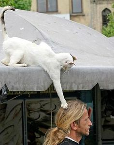 cats...they are just so....out there!