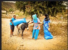 Collecting argan fruit and laoding it on a donkey to be taken back to the Cooperative.